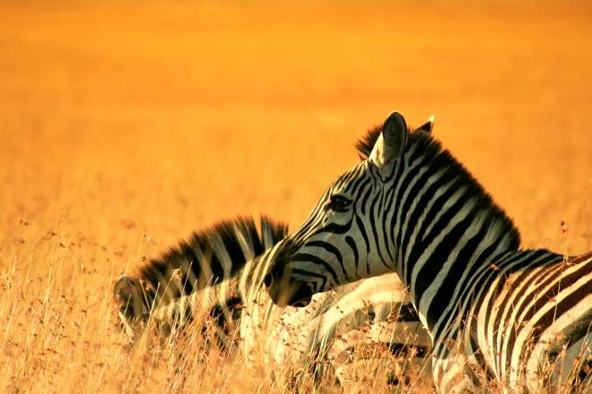 hot-air-balloon-safari-maasai-mara-kenya